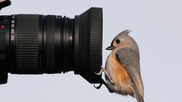 lenses-for-bird-photography