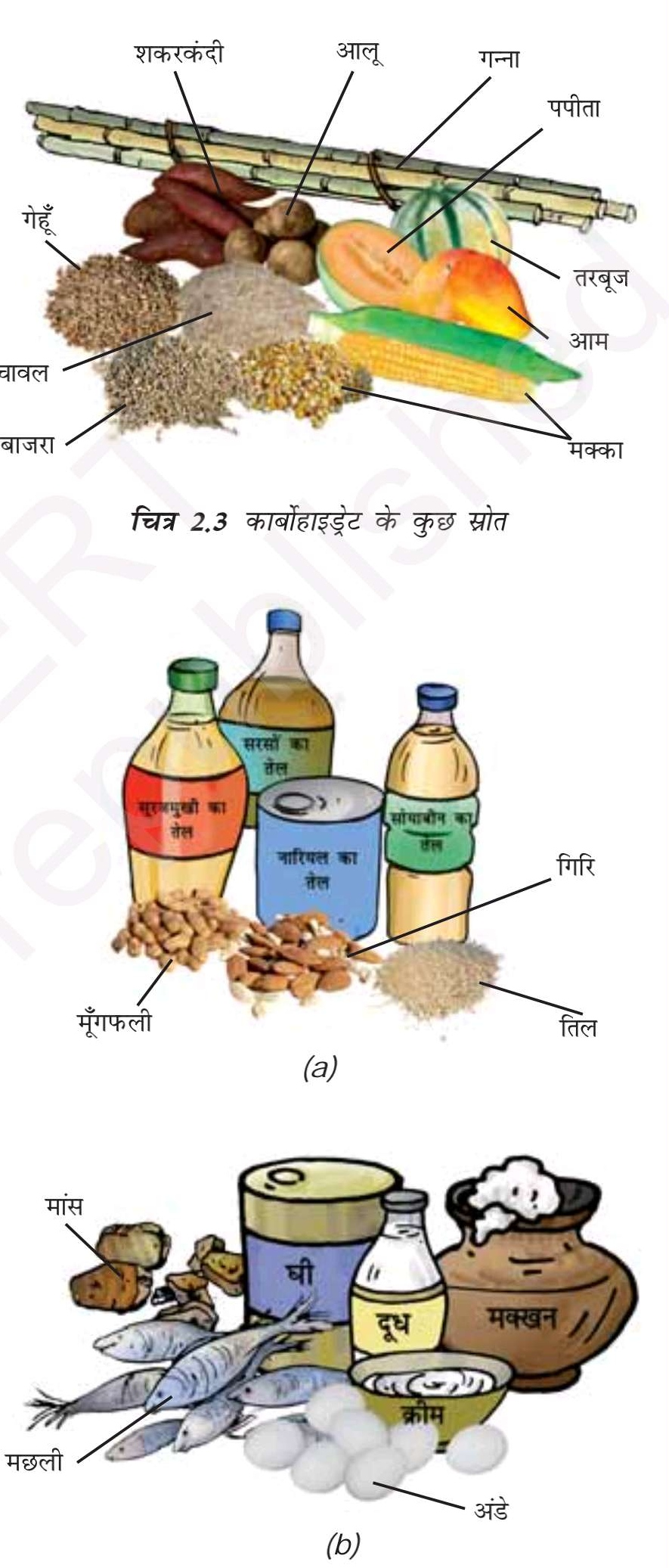 कार्बोहाइड्रेट, वसा और प्रोटीन - Carbohydrates, Fats and Proteins
