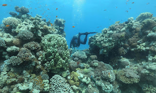 Estimates vary but coral reefs are thought to sustain the lives of about one billion people. (Photograph Credit: Menahem Kahana/AFP/Getty Images) Click to Enlarge.