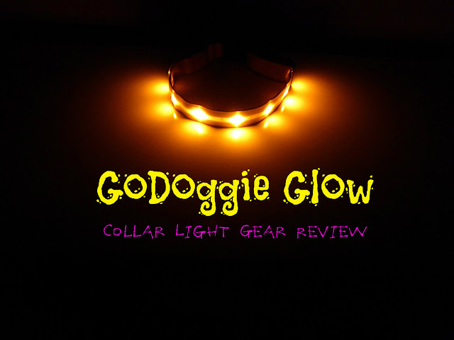 GoDoggie Glow Collar Light Gear Review, Hiking with Dogs in the Dark, Dog safety
