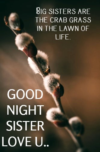 good night images for elder sister