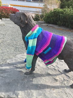 The same sweater again only this time it is the Labrador retriever dog that has the cardigan around its shoulders.
