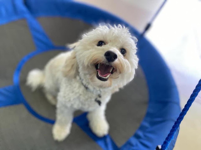 Bear on a swing at Dogs Inc
