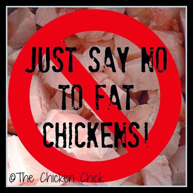 Treats or snacks can be employed as an occasional distraction, but should not be relied upon as a primary form of entertainment. No more than 5-10% of a chicken's daily diet should consist of extras other than layer feed. Improper feeding is the main cause of the obesity epidemic in backyard laying hens.