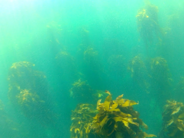 Kelp forest - Simon's Town