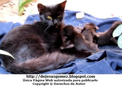Foto de gata negra con sus crias (todos negritos) con 2 días de nacidos. Foto de gata de Jesus Gómez