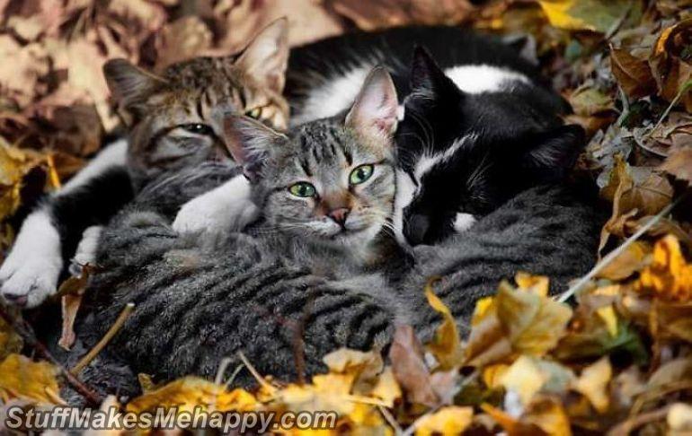 5. Cats Gang