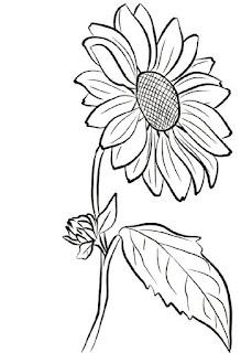 gambar bunga sketsa