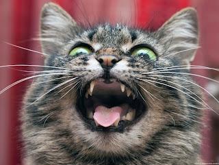 ¿Cómo calmar a un gato?