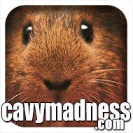 CavyMadness