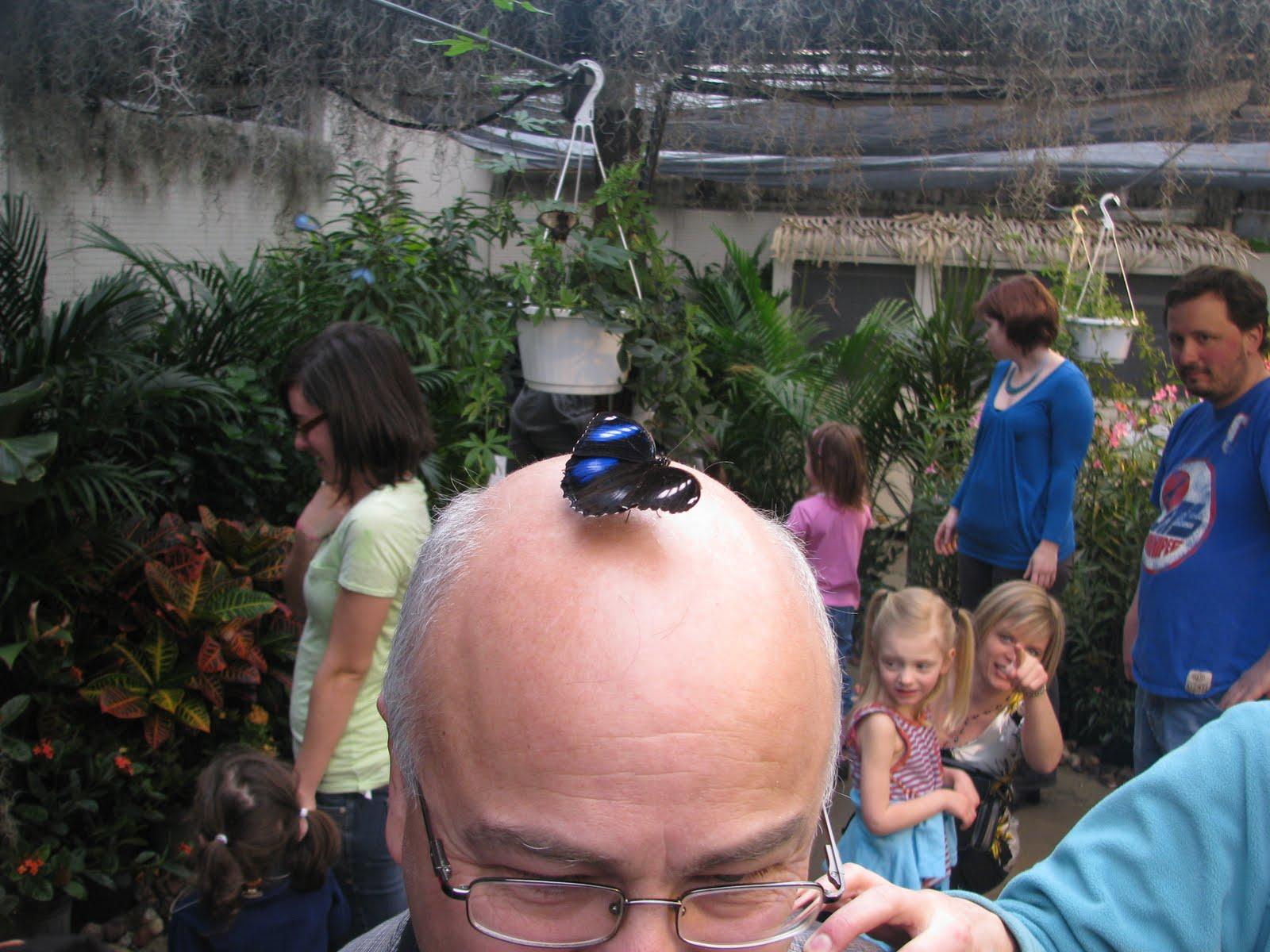 Diane B L O G En Passant Par La Vallee Papillons En Fete 2011 Au