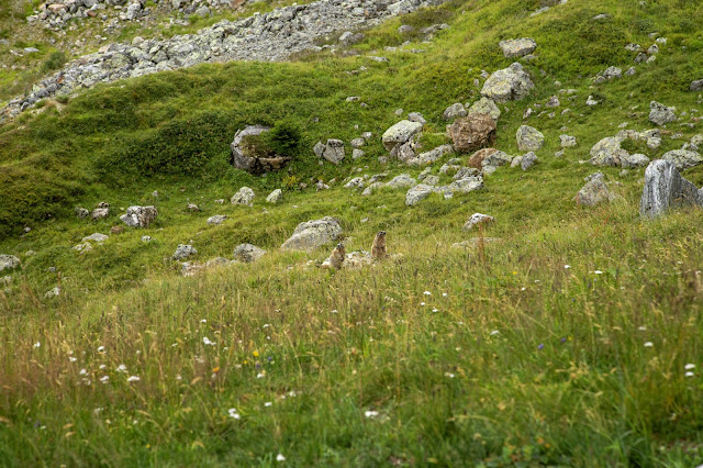 Furglersee Murmeltiersteig Serfaus-Fiss-Ladis Wandern-Tirol 04