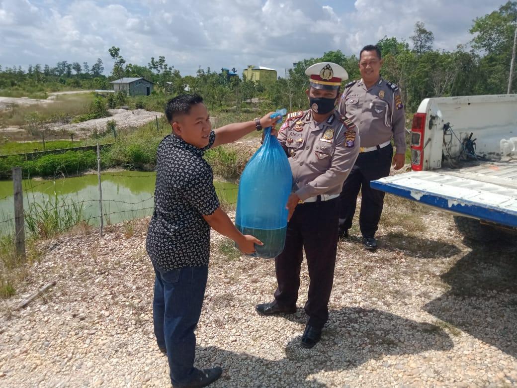 Ribuan Bibit Ikan Diserahkan Satlantas Polres Gumas ke Masyarakat di Tariak