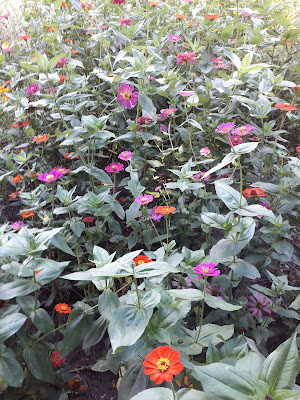 universo de flores