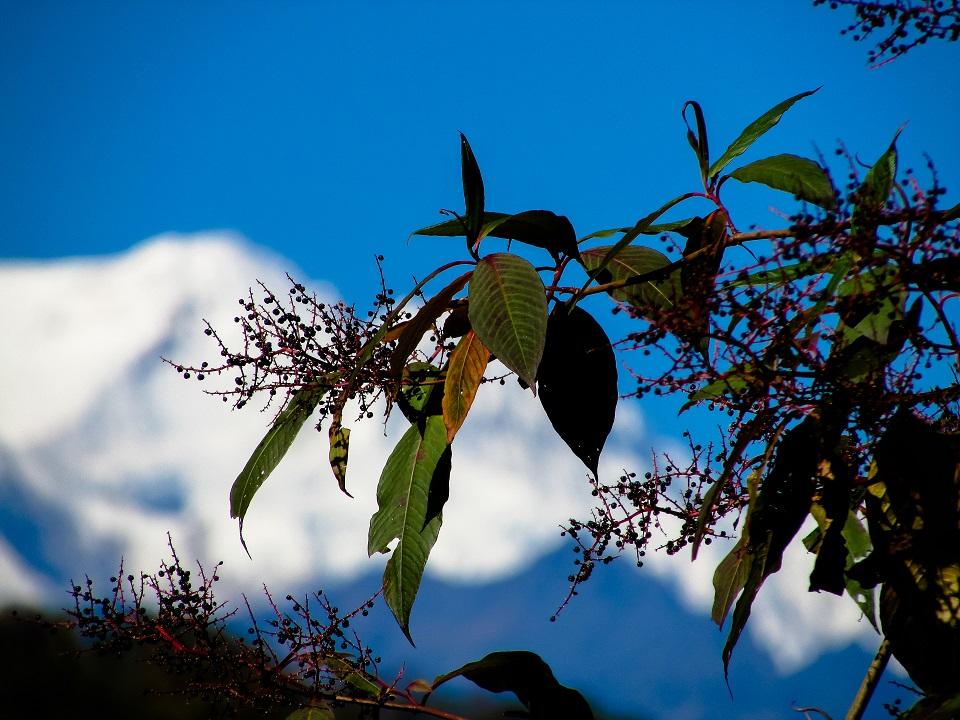South Sikkim sceneries@DoiBedouin