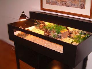 torto-table-kura-kura.jpg