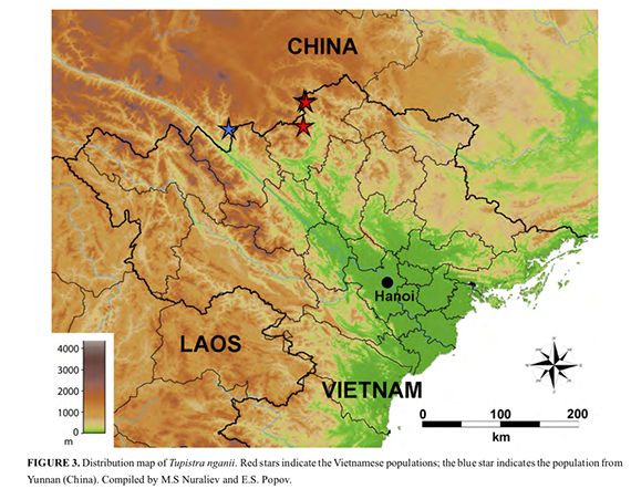 Distribution map of Tupistra nganii. Red stars indicate the Vietnamese populations; the blue star indicates the population from Yunnan (China). Compiled by M.S Nuraliev and E.S. Popov