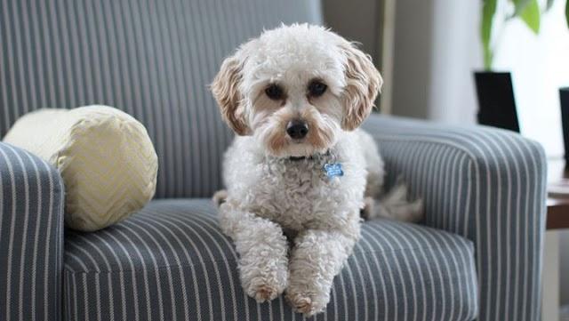 Γιατί ο σκύλος σας δεν έρχεται όταν τον φωνάζετε;