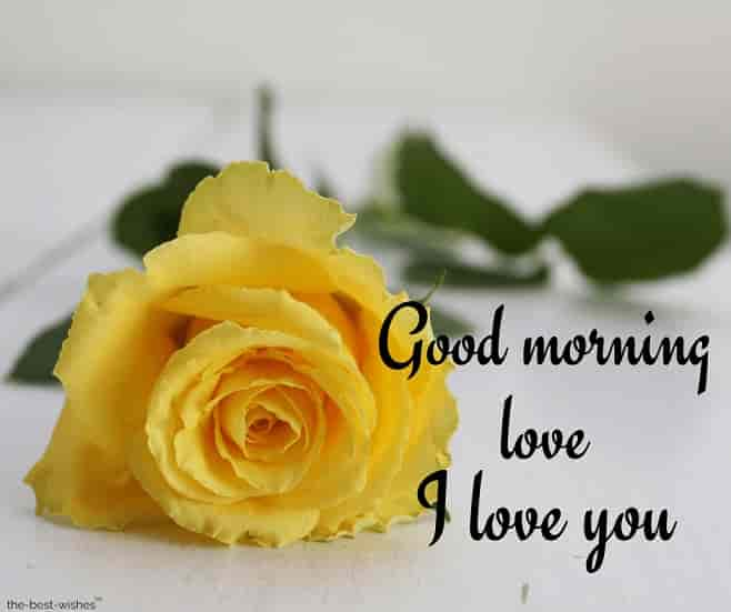 i love you good morning love with yellow rose