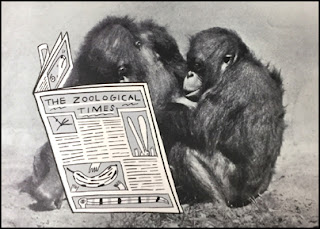Monkeys Reading The Zoological Times