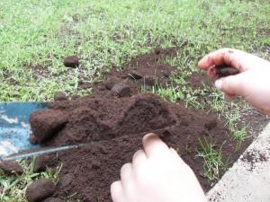القهوة مفعول سحري للنباتات coffee-grounds-lawn1-300x225.jpg