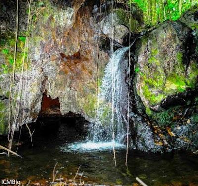 Parque Nacional Campos Ferruginosos de Carajás, Parauapebas, Canaã dos Carajás, Pará, unidade de conservação, icmbio, vale, mineradora vale, compensação ambiental, licenciamento ambiental, maior parque de cavernas do Brasil, natureza, conservação, blog natureza e conservação