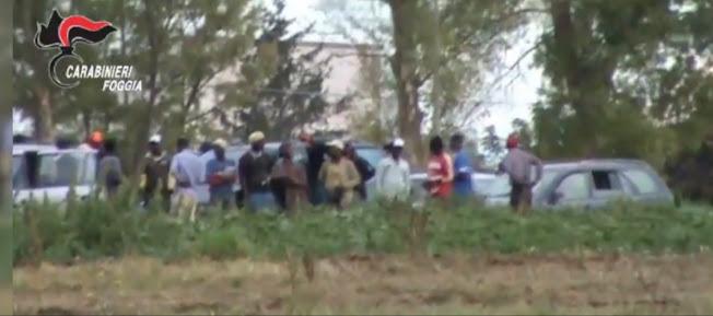 """Operazione """"SCHERMO"""": arresti nelle campagne di Foggia e Campobasso"""