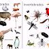 Animais Vertebrados e Invertebrados - Exemplos e Características