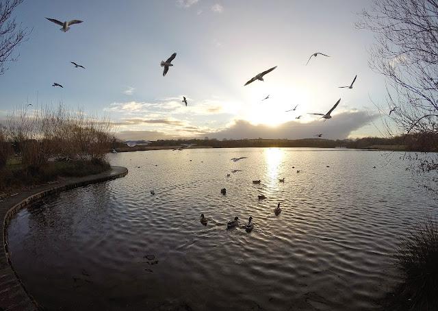 Cosmenston Lake