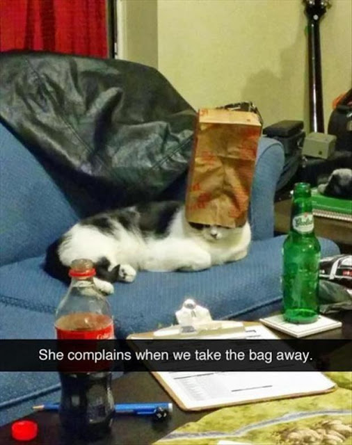Khi lũ giặc mèo bị bắt quả tang đang quậy tanh bành nhà cửa