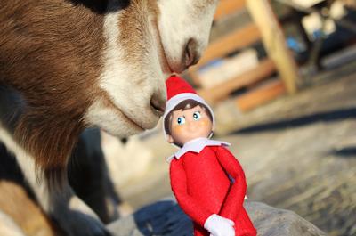 Les Islandais croient-ils vraiment aux elfes?
