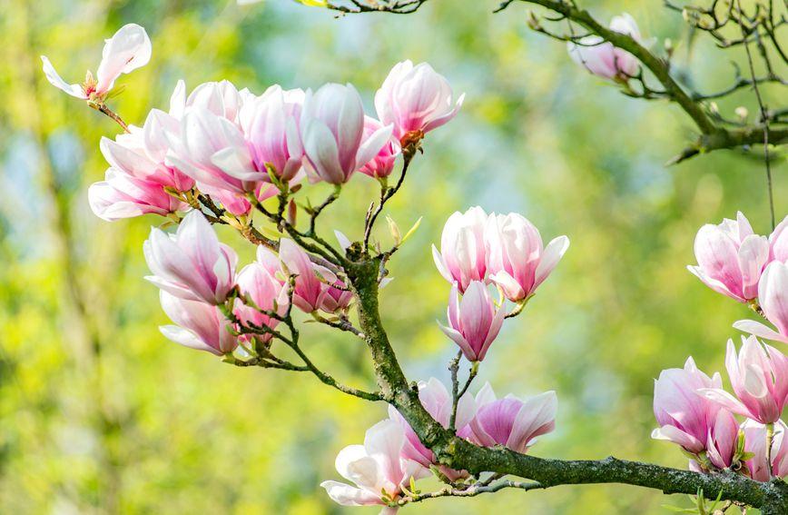 ožujak-proljeće-osobnost-karakter