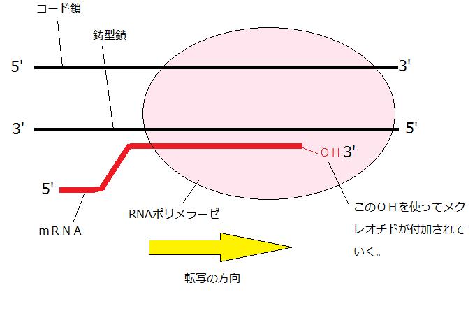 矢口はっぴーブログ「わかりやすい高校生物基礎・生物まとめ」(過去の ...