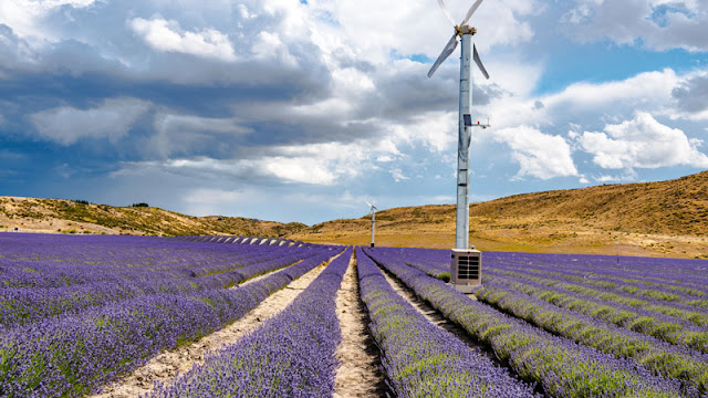 Windmill among purple flowers