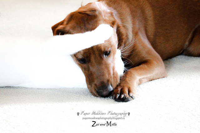 Paper Meadows Photography Blog-Milla and Zai -Pet Photography-Pet love