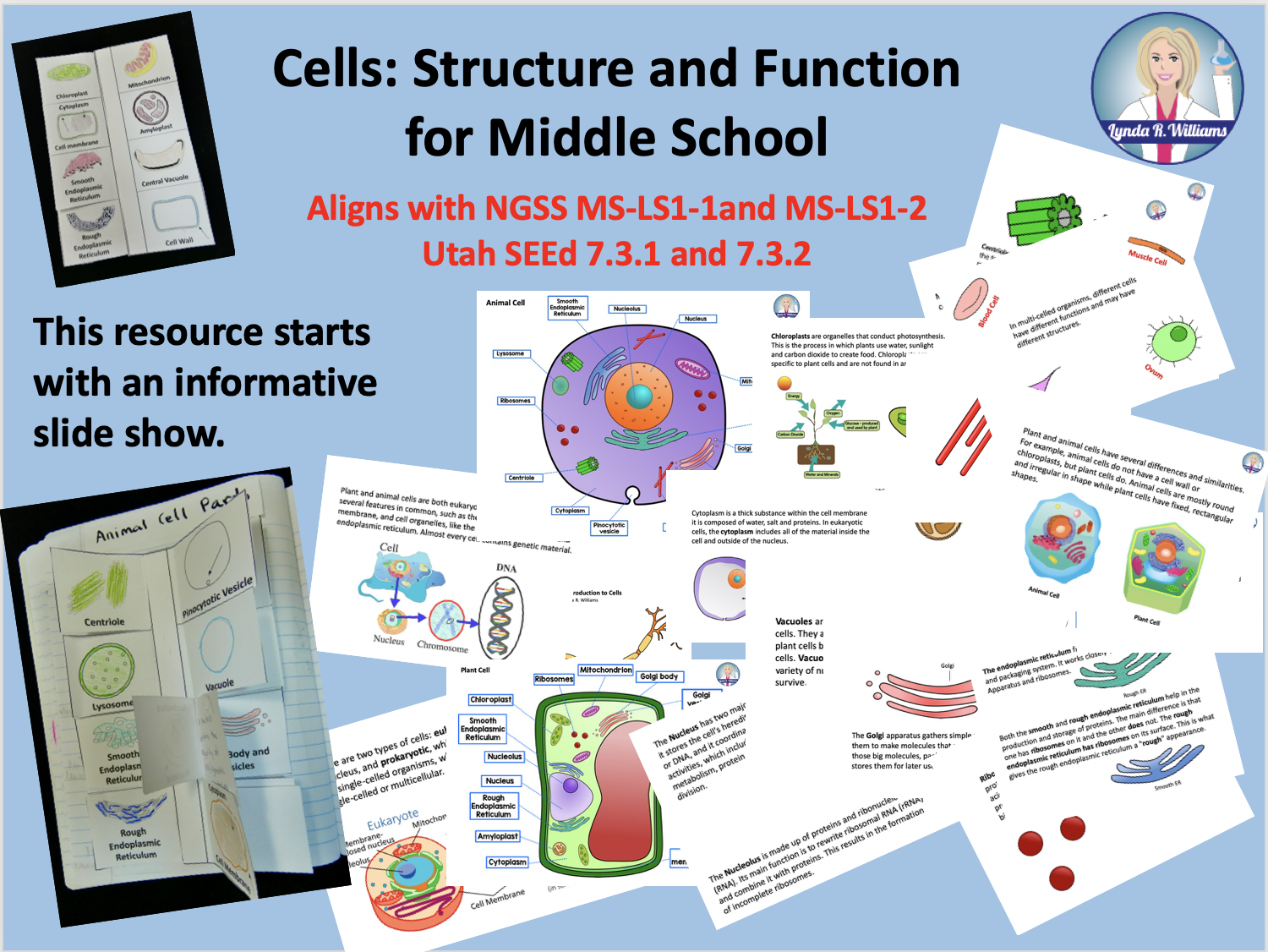 Fun Cell Parts And Function Activities For Middle School
