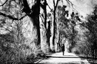 http://fineartfotografie.blogspot.de/2017/04/sun-walk-impressionist-street.html