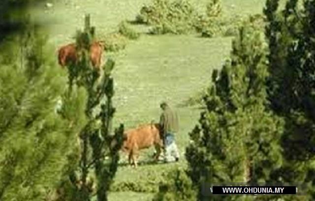 Hukum Lembu Yang Kena Rogol, Apa Kata Ustaz Azhar Idrus?