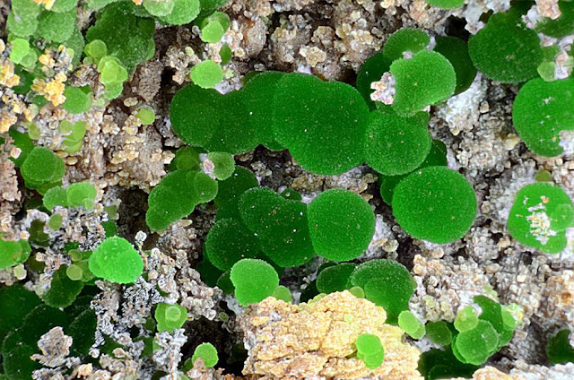 Conichalcite And Olivenite on Matrix