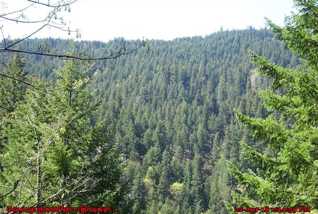 Gifford Pinchot National Forest WA