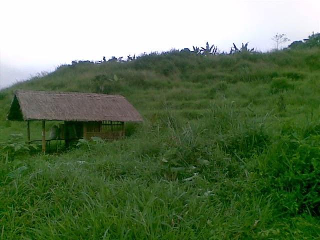 Foto(5188) Jual Tanah Milik | Kebun 23 Ha, Lokasi Puncak jual tanah di puncak