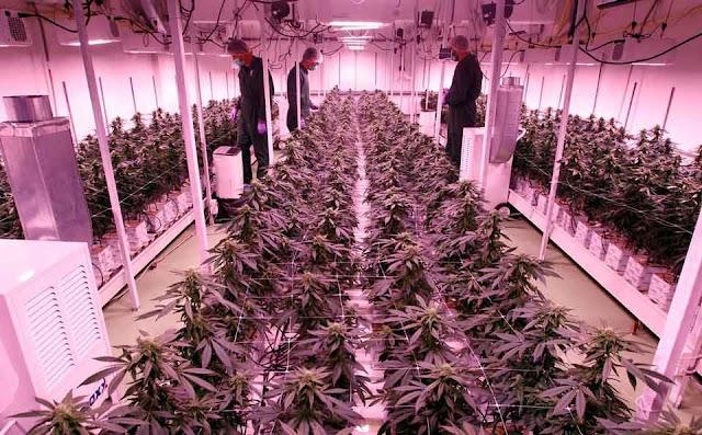 Reuters: Mazedonien setzt auf medizinisches Cannabis um Wirtschaft und Exporte anzukurbeln