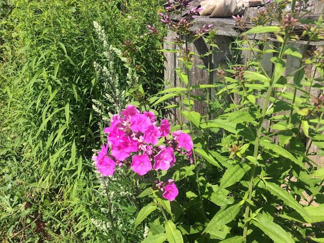 цветут цветы на нашем огороде
