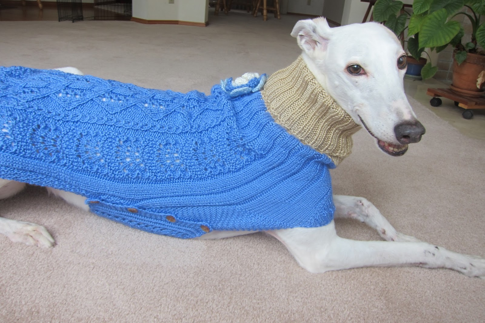 Knitting Patterns For Greyhound Sweaters : Greyhound Knit Sweaters: Sky blue sweater for a girl dog
