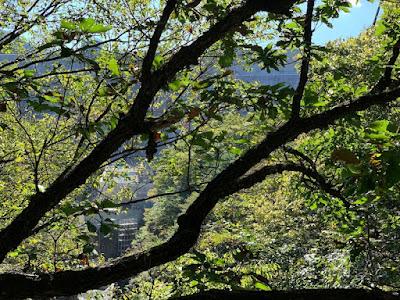 下流側から見上げた八ッ場ダム