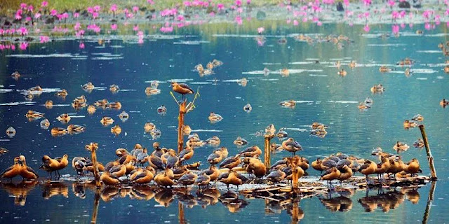 Migratory Birds Of Bangladesh In Jahangirnagar University