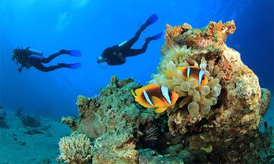 Big Reef