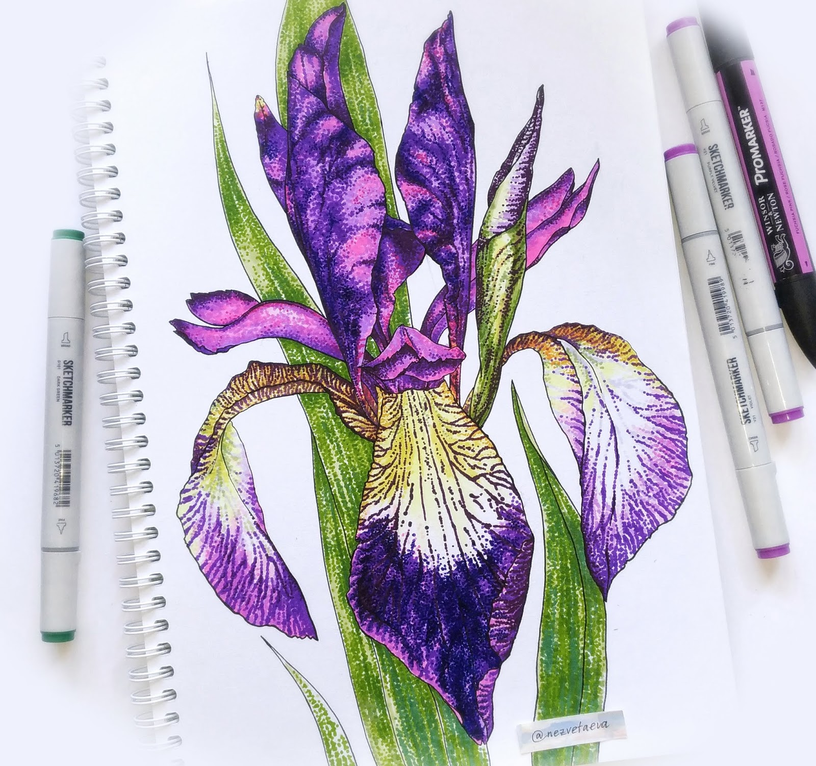Sonia nezvetaeva, marker sketch, flower illustration, Iris, Violet, Copic, Sketchmarkers, Promarker