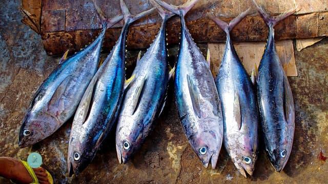 فوائد سمك التونة