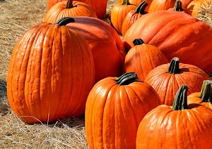 6 Exciting Health and Skin Benefits of Pumpkin